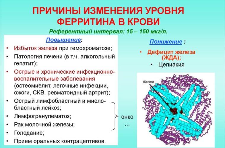 изменение ферритина в крови