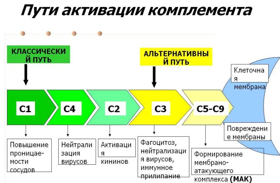 Активация системы комплемента