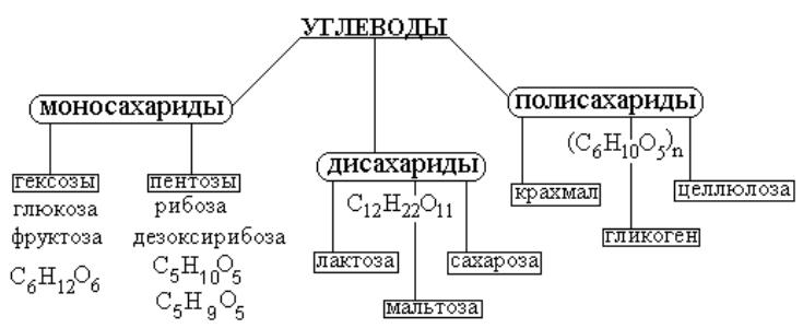 Химическая классификация углеводов
